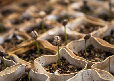 Planting church that plant churches